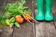 Woman in rubber boots in the garden with vegetables. Stock Photos
