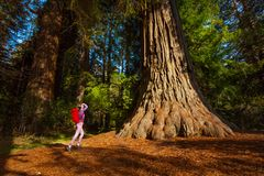 Woman with rucksack near tree, Redwood California. Woman with rucksack standing near the big tree in Redwood California during summer sunny day Royalty Free Stock Photos