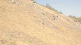 Woman runner happy and celebrating success. Female run on top of the mountain, cheering in winning gesture. stock footage