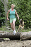 Woman running with a dog jumping over a log. Woman keeping fit running and jumping over logs with a Belgian Shepherd dog English countryside Stock Images