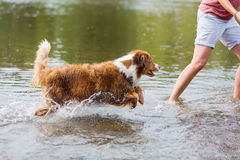 Woman is running with a dog in the water stock photos