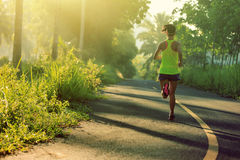 Woman running on morning tropical forest trail Royalty Free Stock Photography