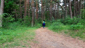 Woman running on pine forest trail stock footage