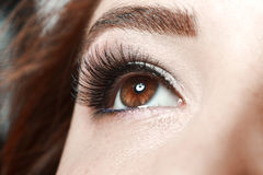 Woman& x27; s褐色眼睛 库存图片