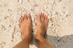Woman's Bare Feet on the beach. Stock Images