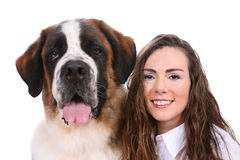 Woman's Best Friend Saint Bernard Stock Photography