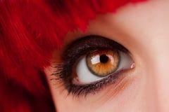Woman's brown Eye Closeup Stock Images