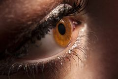 Woman`s brown eye peeping in darkness Royalty Free Stock Photography
