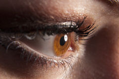 Woman`s brown eye peeping in darkness Royalty Free Stock Image