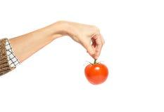 Woman& x27; s de hand houdt tomaat op wit wordt geïsoleerd dat Stock Fotografie