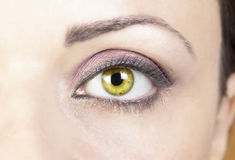 Woman's eye. Portrait of young woman with beautiful green eyes Royalty Free Stock Image