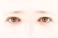 Woman's eyes Royalty Free Stock Photos