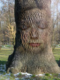 Woman's face embedded in the bark of the tree Stock Photo