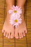 Woman's feet Stock Photography