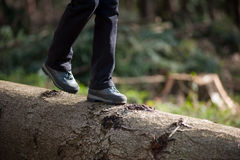 Woman& x27;s feet in sneakers walking on log in the forest Royalty Free Stock Photo