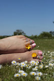 Woman's feet in sunny meadow Royalty Free Stock Image