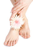 Woman's foot and hand with flowers on white Royalty Free Stock Image