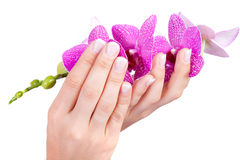 Woman's french manicure Royalty Free Stock Photo