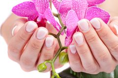Woman's french manicure Stock Photo