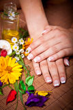 Woman's french manicure and pedicure. Beautiful female feet and hands Stock Image