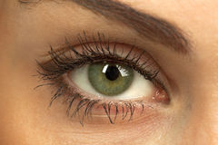 Woman`s green eye Stock Photo