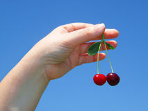 Woman's hand with cherries Royalty Free Stock Images