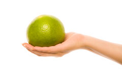 Woman's hand with citrus Stock Photo