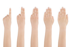Woman's hand counts from one to five. Stock Images