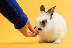 Woman`s hand feeding a rabbit royalty free stock photo