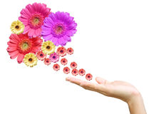 Woman's hand with flowers Stock Photo