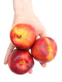 Woman's hand with a fruit nectarines on white background Royalty Free Stock Image