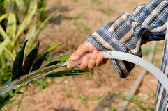 Woman's hand with garden hose watering plants Stock Image