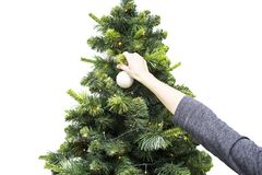 Woman s hand hanging a white Christmas ball on a green plastic tree. Isolated on white background.  stock photo