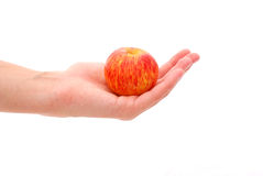 Woman's Hand Holding an Apple Stock Photos