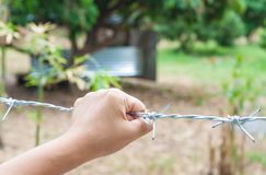 Woman's hand holding barbed wire fence for emotional captivity a Royalty Free Stock Image