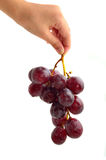 Woman's hand holding a bunch of dark grapes Royalty Free Stock Photography