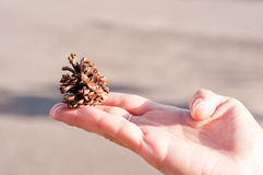 Woman's hand holding a cone Stock Image