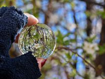 Beautiful almond flowers in bloom in crystal ball. Woman`s hand holding crystal/ glass ball whit beautiful white almond flower reflected in it/ abstract royalty free stock photography