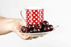 Woman's hand holding a cup and saucer Stock Images