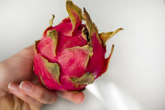 Woman`s hand holding exotic Dragon fruit isolated on grey textured background. Royalty Free Stock Image