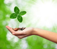 Woman's hand are holding a money with clover Stock Photography