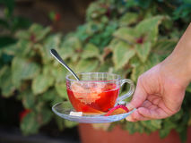A girl`s hand with a cup of fruity tea on a natural background. Strawberry balsamico herbal tea. Copy space. royalty free stock photo