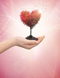 Woman's hand holding a tree heart Stock Image