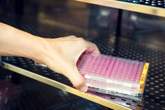 Woman's hand inserting virus cultures into the heat box. Woman's hand inserting virus cultures into the heated box Royalty Free Stock Image