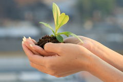 Woman's hand with plant. Royalty Free Stock Image