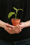 Woman's hand with plant Stock Photography