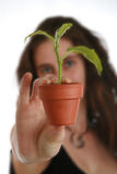 Woman's hand with plant stock photo