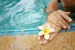 Woman's hand with plumeria flower at swimming pool. Stock Images