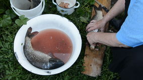 Woman's hand pulls a large carp. Out of the bowl and pull out the gills. Two fresh carp in a large bowl with water stock video