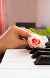 Woman's hand put a pink rose on piano keyboard. Stock Images